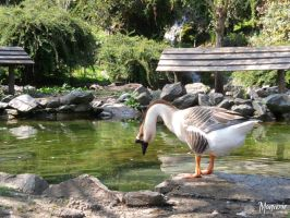 The Narcissus goose - Manverie by Jandugirls