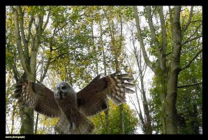 Spread your Wings by Arawn-Photography