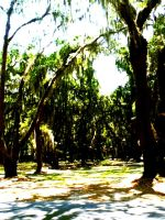 Forest of Spanish Moss by RainingBlackStars