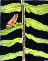 gabon tree frog by EatToast