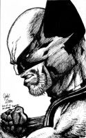 Wolverine drawing by JakeGreen