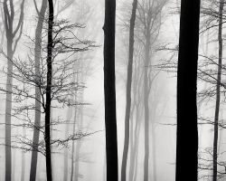 A Strip of Trees 05 by HorstSchmier
