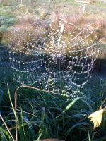 Jeweled web by BandyVVhips