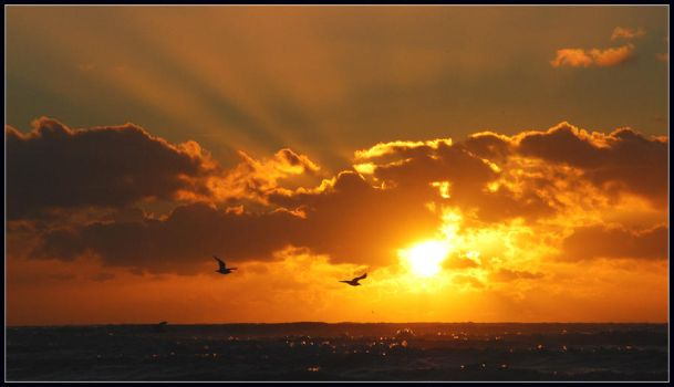 Sunset with gulls at IJmuiden by jchanders