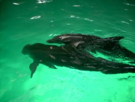 Dolphins At Play by nowherekid85