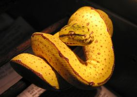 Tree python by kwant