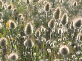Fluffy Plants 2991627 by StockProject1