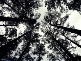 the Trees of Beaconsfield by ChristoMan