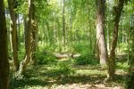 Forrest Alley 08 by ALP-Stock