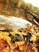 Fall 2 by barefootphotos