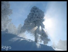Light and snow by kayno