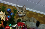 Christmas Kitty by venicet