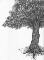 Tree of Death by jcho