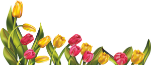 [RES] Tulip Border PNG by HanaBell1