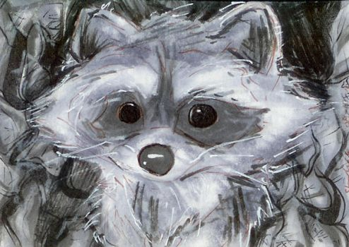 Baby Raccoon Aceo 081010 by raccoon-eyes