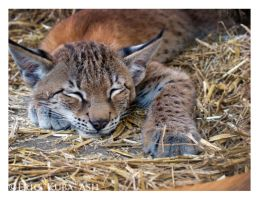 Lynx Loaf by HeWhoWalksWithTigers