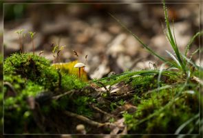 Forest floor by divinity9981