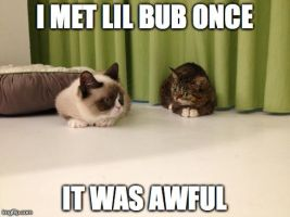 I MET LIL BUB ONCE! by 4EverRandomPuppy20