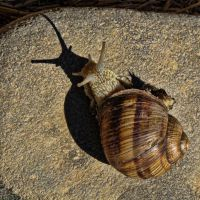 Snail shadow by SyllAndy