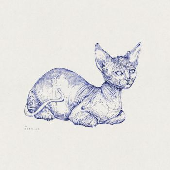 Sphynx Cat by Sithzam