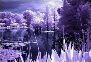 Arboretum Lake IV Infrared... by MichiLauke