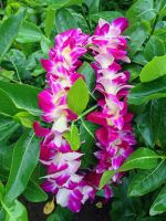 Dendrobium Orchid Lei by joeyartist