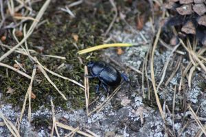 Beetle by Isabella3991