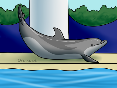 Bottlenose Dolphin by orcinace