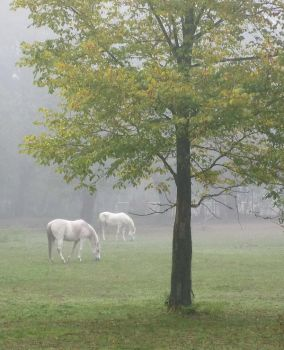 Horses in the fog by starykocur