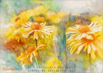 Golden days - Watercolors by AuroraWienhold