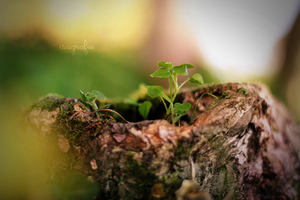 come little plantlet by Isagrafie