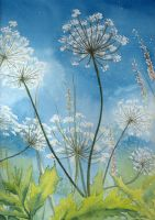 Cow Parsley by louise-art