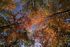 Backlit Leaves and Sky by LakeFX