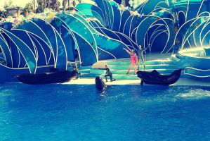 Killer Whale Act by Germanicus-Fink