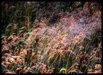 Grasses in the Wind... by MichiLauke