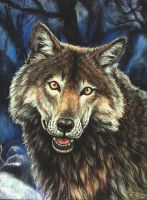 Playtime - wolf pastel portrait by Bisanti