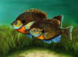 Pretty Little Panfish by ghostgirl69