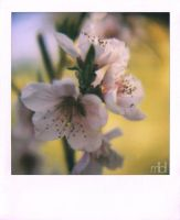Blossoming - 1 by mll0ll