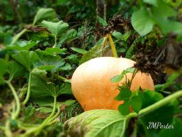 Squash by JMPorter