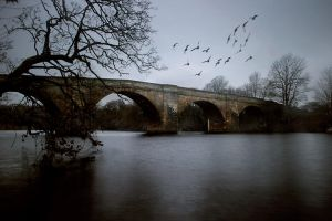 Chollerford with pigeons by hold-steady