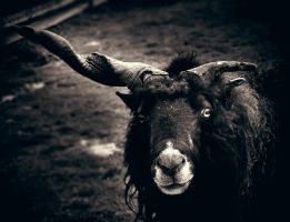 CXCI. ..Horned One... by behherit