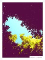 Blue Sky and Trees's Leaves II by Vianto