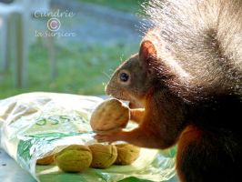 Squirrel 118 by Cundrie-la-Surziere