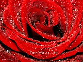 Happy Valentine's Day! by WhiteBook