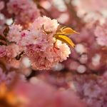 Pink blur by EliseEnchanted