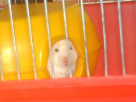 Unmamed Hamster 1 by Fennic