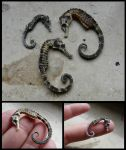 Pot Bellied Seahorses by CabinetCuriosities