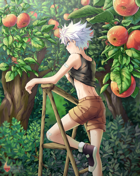 Hunter x Hunter: Prime crop by Shailo