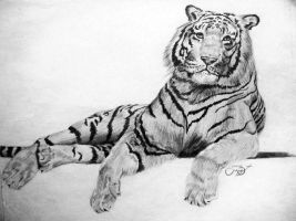 my lopsided tiger by Christa-S-Nelson