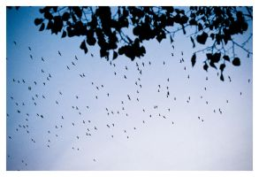 leaves, birds. by fxcreatography